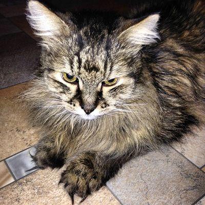 #кот #котэ #кошки #2014 #katz #katzen #cat #cats #instacats #catsagram #catsofinstagram #instacats #we_love_cats #instagramcats #caturday #catoftheday #猫 #kass #catlovers #cutecats #chat #kissa #instakotik #kedi #kot #katt #고양이 #貓 #gato #kucing Catsagram Catoftheday Cat Catlovers Cats 2014 Gato кот 貓 Instacats Katzen Instakotik котэ кошки Caturday 고양이 Kedi Katt 猫 Cutecats Chat Kot Kissa We_love_cats Kucing Kass Catsofinstagram Katz Instagramcats