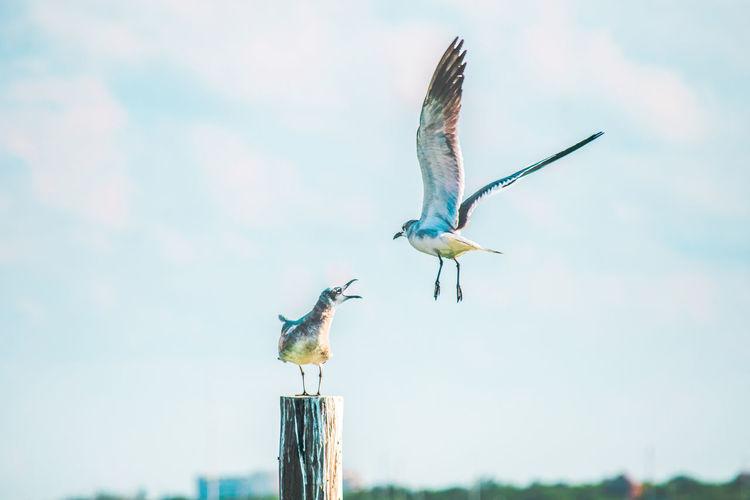 Seagulls against sky