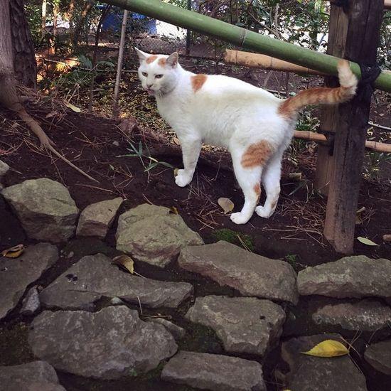 中野 哲学堂公園 Cat Neko ねこ 猫 ネコ cats 外猫 自由猫 さて写真を上げてる目の前を横切るニャンコに誘われるまま…哲学堂を後にします??待って〜???