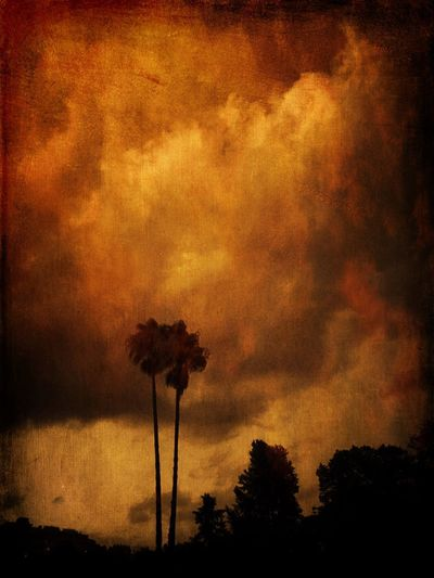 Palm trees Palm Tree Tree Plant Cloud - Sky Sky Orange Color No People Silhouette Scenics - Nature Dramatic Sky Sunset
