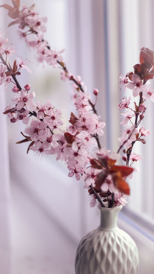 Close-up of pink cherry blossoms in vase