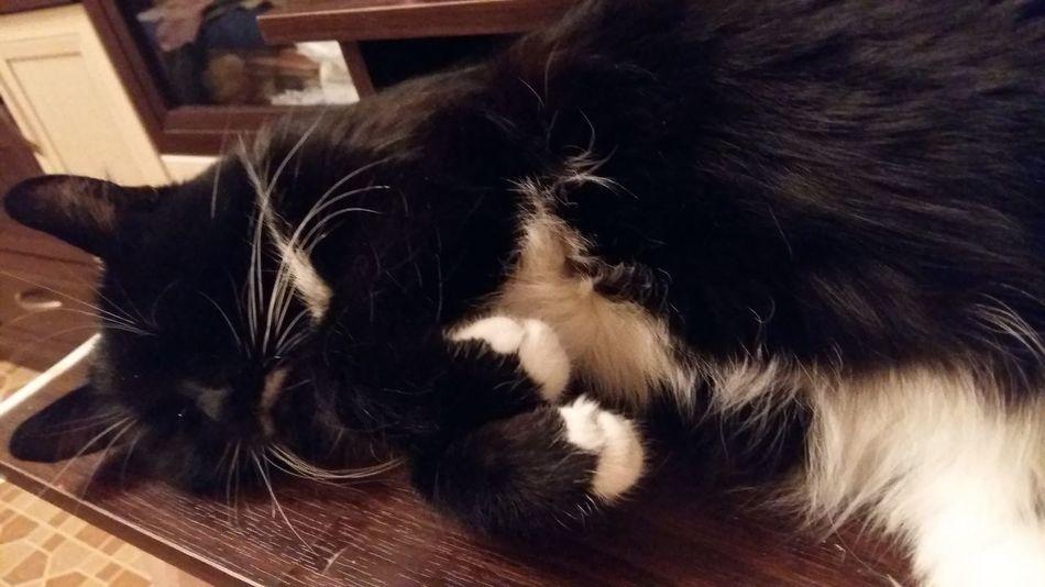 Cat Love кошка кошечка моя любовь EyeEm Selects Pets