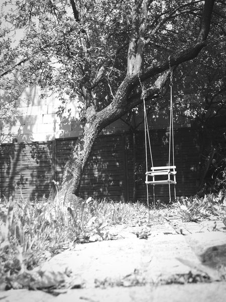 Black And White Swinging In A Tree Black & White Tree Garden Swing On A Tree Swing Swinging Black And White Collection  Old But Awesome Old Toys Old Tree On A Tree From Down Wooden Toys From Path Path Pathway From Ground Level Old Stuff Old Swing Tree Swing Traditional Toys Wooden Swing Classic Toys
