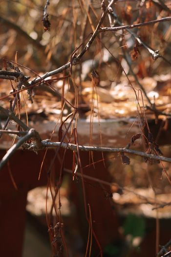 Close-up of dry twigs on branch