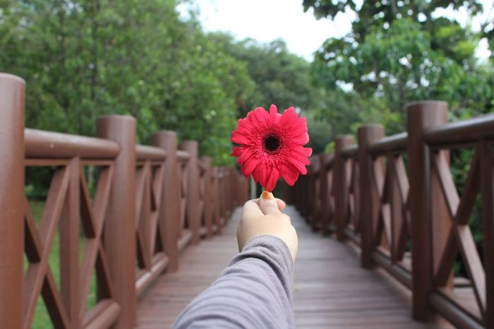 Red Human Hand Flower Day Green Perpesctive Nature Nature Photography Red Flower Red Flower Among Green Hand And Flower Human Body Part Mid Adult One Person One Woman Only Outdoors People Real People Only Women Adults Only Women Adult