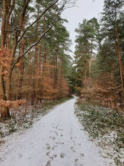 Winter path Winter Forest Snow Path Way Landscape Nature Frozen Covering Weather Condition Season  Weather Cold Cold Temperature Woods Snow Covered Snowfall FootPrint