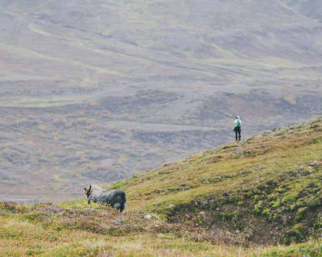Rear view of man with dog standing on mountain