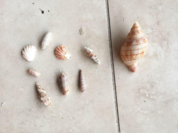 EyeEm Selects shells sanibel island Beach Seashell Nature