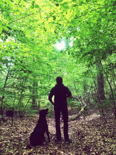 Green Color Shadow Standing Silhouette Day Nature One Person Tree Real People Dog Outdoors Pets Animal Themes