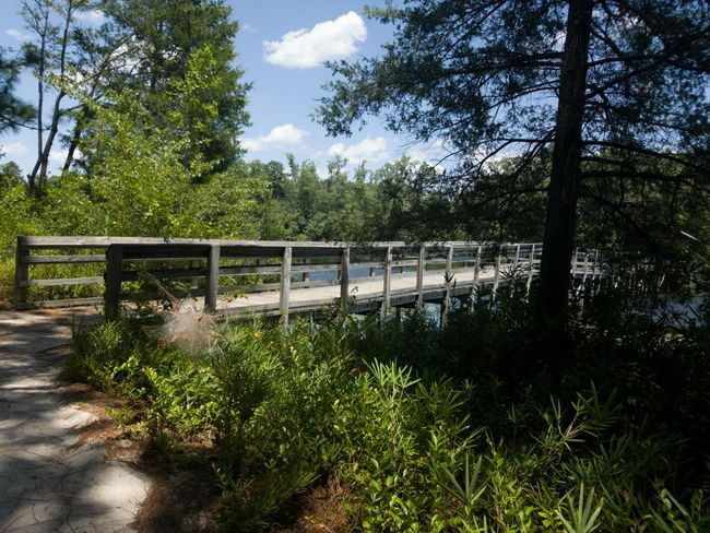 Beautiful Day Walking In The Park Lovely Weather Peace And Quiet Showcase July 43 Golden Moments Summertime Outdoor Photography Wildlife & Nature Nature Photography Lakeside No People Wood Bridge Enjoying The Sun Shades Of Nature Sky And Clouds Hidden Gems