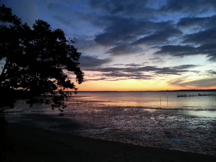 Beach Beauty In Nature Cloud - Sky Day Horizon Over Water Idyllic Nature No People Outdoors Reflection Scenics Sea Silhouette Sky Sunset Tranquil Scene Tranquility Tree Water