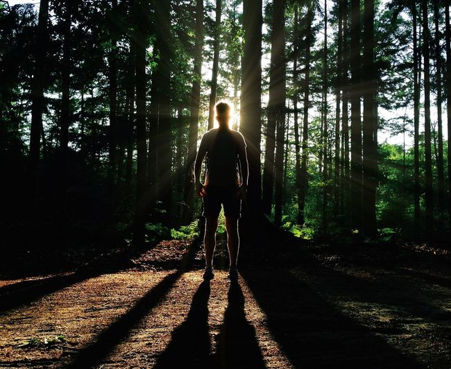 Silhouette of man in forest