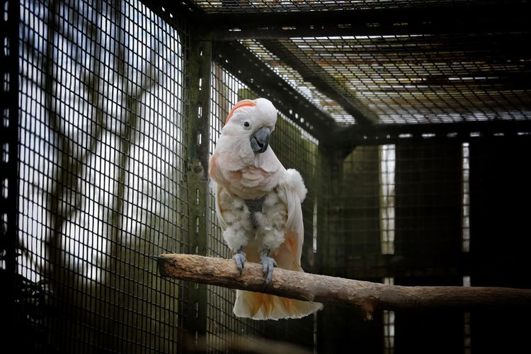 Animal Themes Animals In Captivity Birdland Bourton On The Water Cage Cheltenham Day Dog Domestic Animals Indoors  Low Angle View Mammal No People One Animal Parrot Pets White Parrot