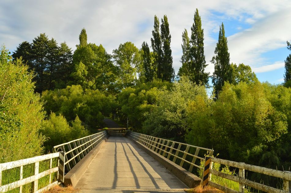 a real bridge. . . one lane only 😜👍🚙📷😊😁😁 Outdoors Bridge - Man Made Structure Beauty In Nature Growth Shadow Bridges_aroundtheworld Bridgeview Awesome Nature Nature On Your Doorstep EyeEm Best Shots Kiwi Clicker New Zealand Scenery Walking Having Fun Getting Inspired Hello World TreePorn Exceptional Photographs Eye4photography  Tree Green Fresh Green Leaves Beauty In Nature Growth Having Fun :)
