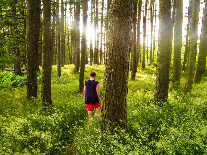 Rear View Of Woman Walking Amidst Trees And Grassy Field During Sunny Day