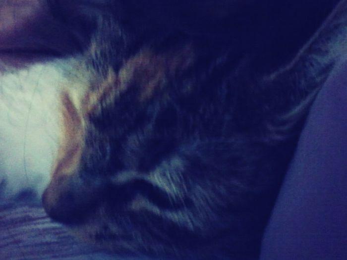 My kitty Cutie♥ First Eyeem Photo
