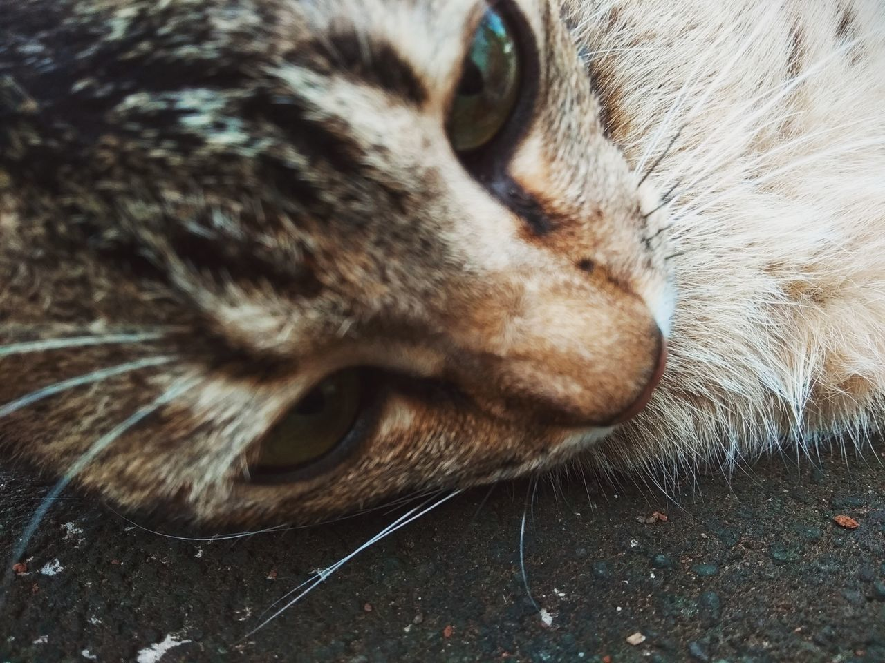 CLOSE-UP OF A CAT LYING