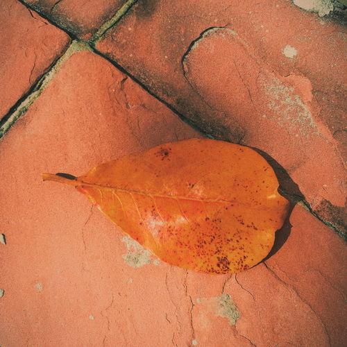 High angle view of orange leaf on footpath