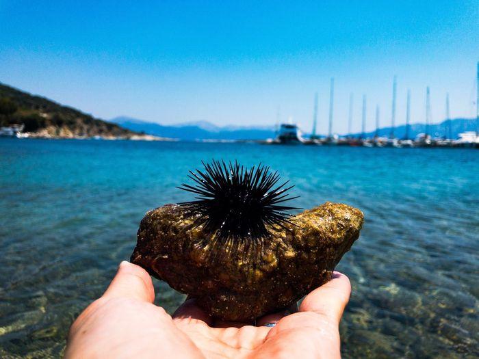 Animal Wildlife Water Sea Animals In The Wild Nature Day Outdoors Sea Urchin