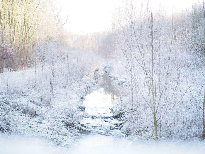 Winterimpression Winter Snow Cold Temperature Bare Tree Nature Tree Beauty In Nature Frozen