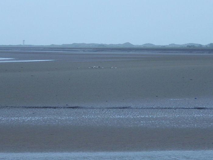 Minimalism Minimal Seascape Landscape Horizon Sea And Sky Wales Nature Birds