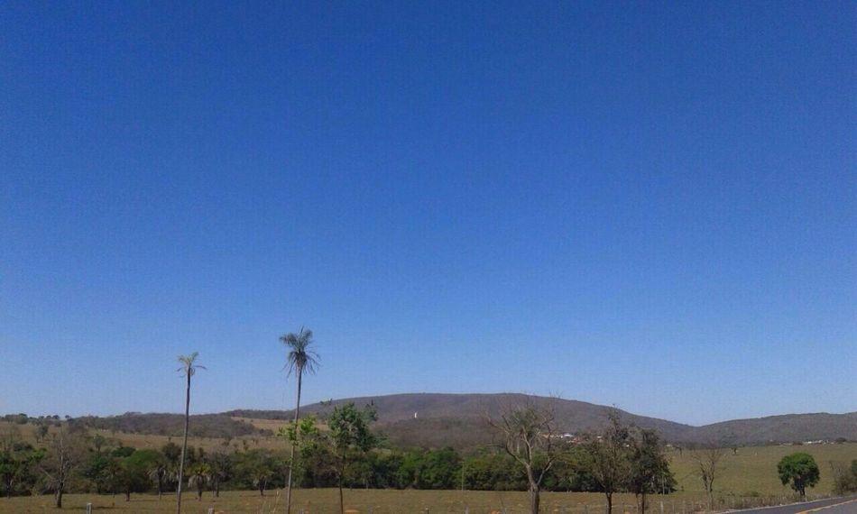 Tree of cerrado vegetation. Goias State. Trees TreePorn Treegasmic Tuesday Landscape_Collection Nature The Greatest Artist