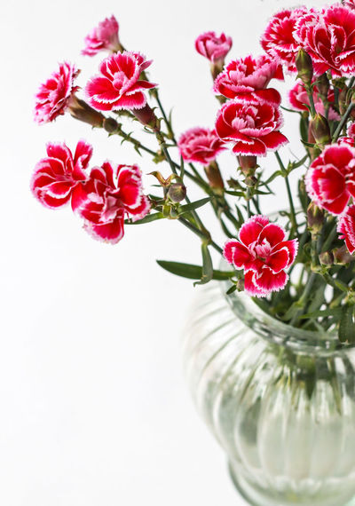 Flowering Plant Flower Plant Freshness Fragility Beauty In Nature Vase Pink Color Vulnerability  Close-up Indoors  Flower Head Nature Petal No People Inflorescence Still Life Table Flower Arrangement Glass - Material Glass Bouquet Bunch Of Flowers Picoftheday Photooftheday