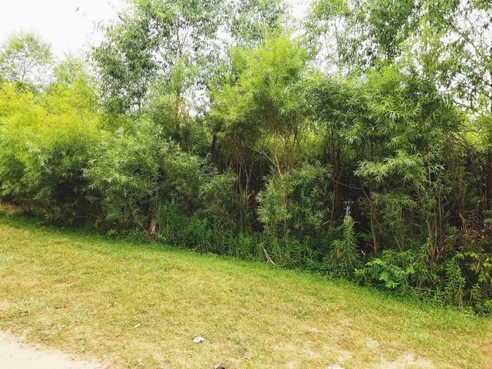Nature Nature Growth Green Color No People Day Grass Outdoors Tree Beauty In Nature Backgrounds Close-up