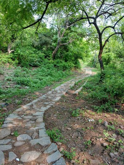 Tree Nature Outdoors Path Green Color No People Beauty In Nature Way Day Forest Nostalgia Beautiful Valley Trekking Nature Travel Destinations Mountain Scenics Tranquil Scene Hills Hillside Peace Peace And Quiet Peaceful Peace Of Mind