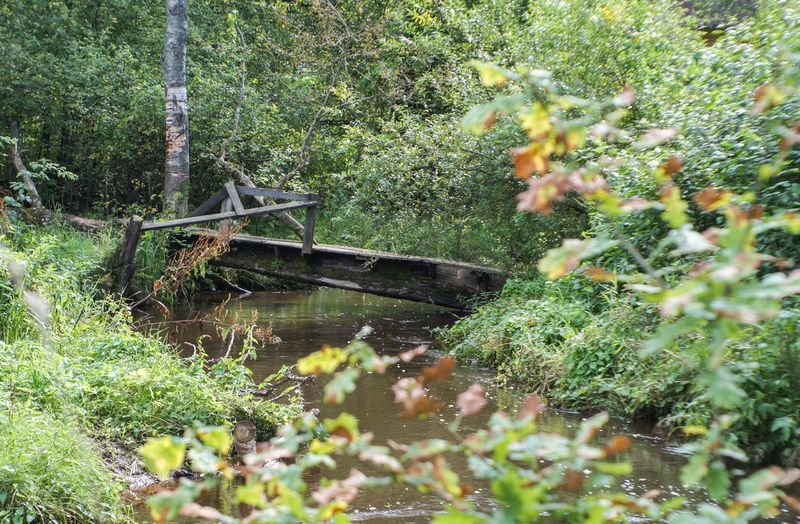 mill Creek Beauty In Nature Bridge Day Grass Green Color Growth Nature No People Outdoors Plant River Stream Tree Water