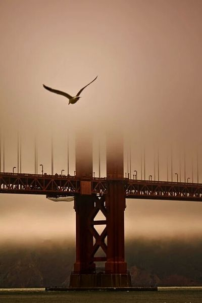 San Francisco Golden Gate Bridge Fog See Photography Hello World Amazing View Night Fall