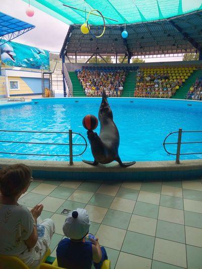 Dolphinarium Seal Pool Show