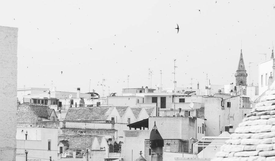 Flock of birds in city against sky