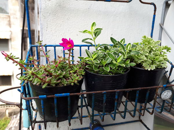 EyeEm Selects Flower Greenhouse Nature Outdoors No People Day Window Box Plant Potted Plant Minitree Freshness Growth Architecture Colour Your Horizn