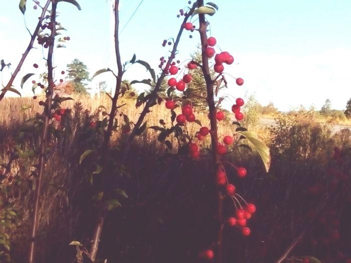 Flower Plant Stem Growth Plant Life Outdoors Tree