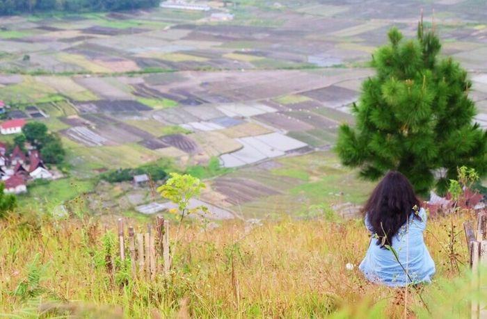 Bettwen green View Landscape Green Nature Calm Photography INDONESIA Sumatra  Life