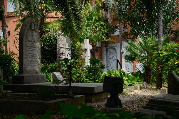 Campo Santo Teutonico Cemeteries Crossway Mourning Oasis Rome, Italy Tree Vatican City