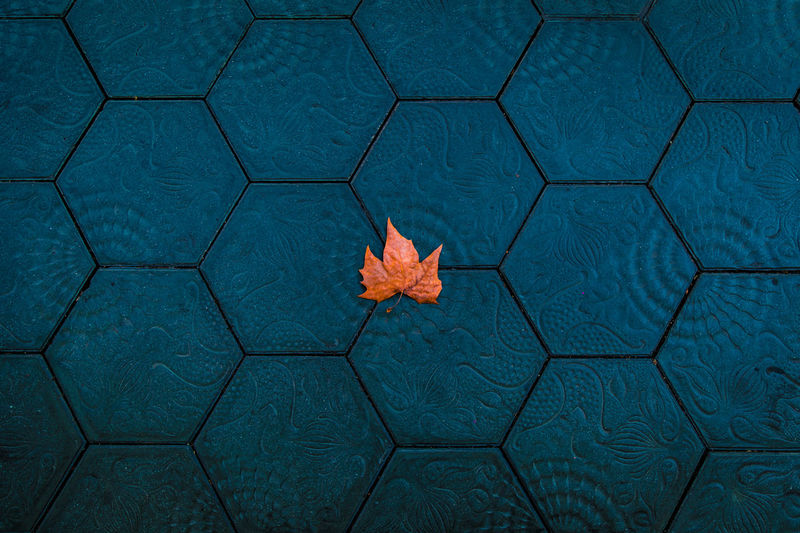 Orange leaf over a surrealistic hexagon tiles pattern. Autumn Barcelona SPAIN This Is Latin America Backgrounds Design Directly Above Europe Fall Leaves Flower Geometric Geometric Shape Hexagon High Angle View Leaf Nature Orange Color Outdoors Pattern Red Shape Sign Surrealist Tile Tiled Floor
