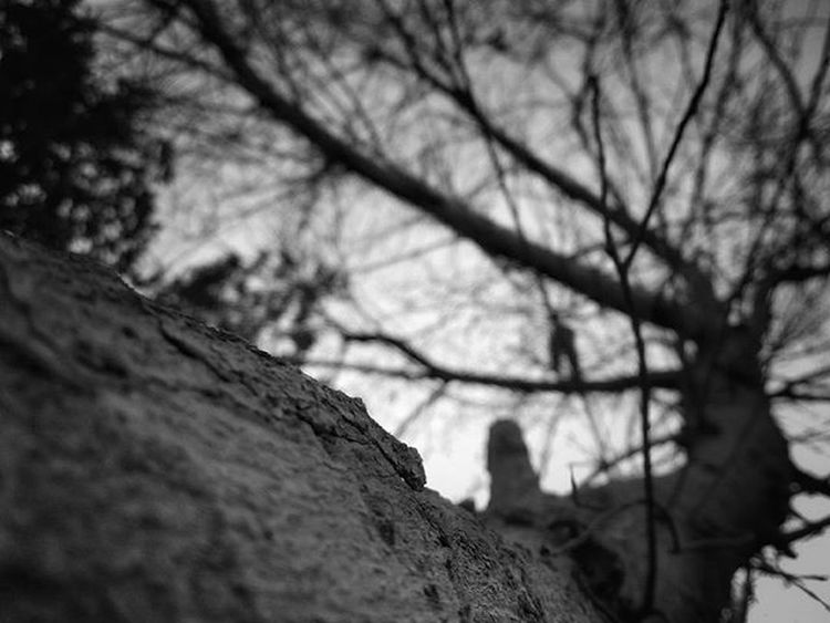 Graveyard horror Graveyard Scary Horror Tree Blackandwhite Blackandwhitephotography Photographer Photooftheday Photo Photography Picoftheday PhonePhotography Myview Wonderful Sky Spooky Untildawn Urbanexploration Explore Bestoftheday Bestphoto
