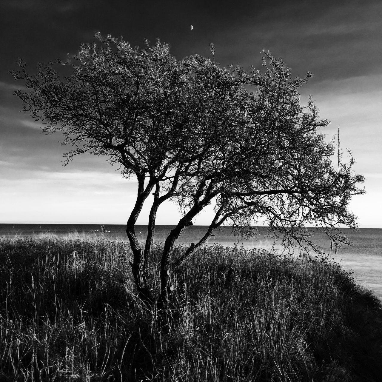 Tree Growing On Sea Shore Against Sky