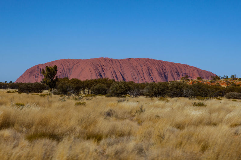 Aboriginal Ayers Rock Uluru Beauty In Nature Beauty In Nature Blue Clear Sky Environment Field Grass Growth Land Landscape Mountain Nature Plant Red Stone Sky Tranquil Scene Tranquility