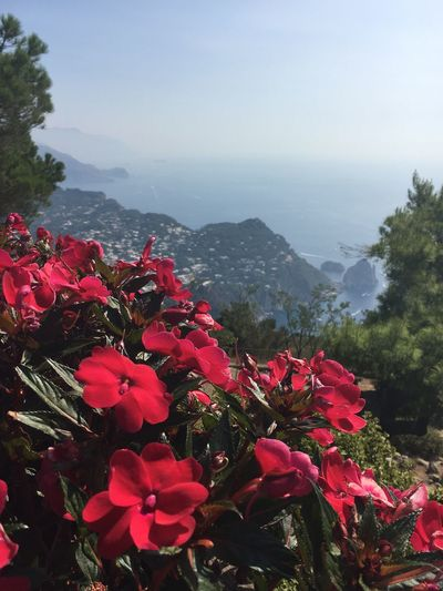 Capri, Italy Anacapri Mountain Flower Fragility Freshness Beauty In Nature Petal Red Growth In Bloom Blossom Nature Leaf Mountain Range Vibrant Color Springtime Close-up Botany Plant Scenics Bunch Of Flowers