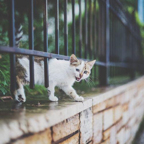 Cat Cats Of EyeEm Cat Lovers Cats Stray Cat Streetphotography Pets Animal
