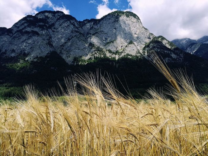 Wheat Mountain Cloud - Sky No People Nature Landscape Sky Tranquility Beauty In Nature Outdoors Field Day Tranquil Scene
