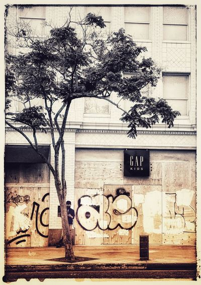 Tree and graffiti on wall against building