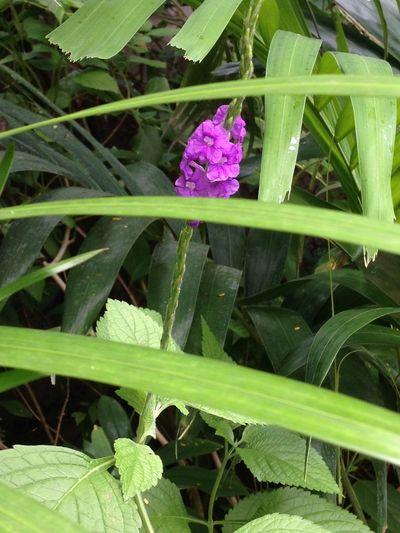 Purple Flower Flowerporn Flowers