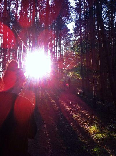 Sun Wood
