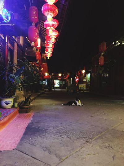 古镇悠闲的狗狗
