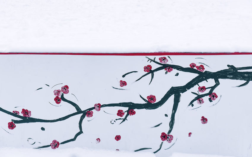 China Beauty Red Plum Winter China Chinese Close-up Day Fl O Flower Flowers Freshness Nature No People Outdoors Red Snow Snow Covered Studio Shot Water White Background Wintersweet
