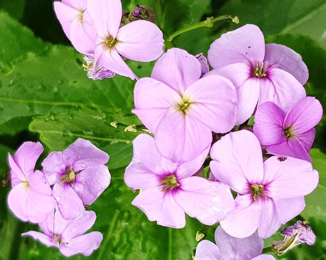 Walking Around Garden Flowers Flowers Collection  Pink Flowers Flower Head Flower Pink Color Petal Close-up Blooming Plant Blossom In Bloom